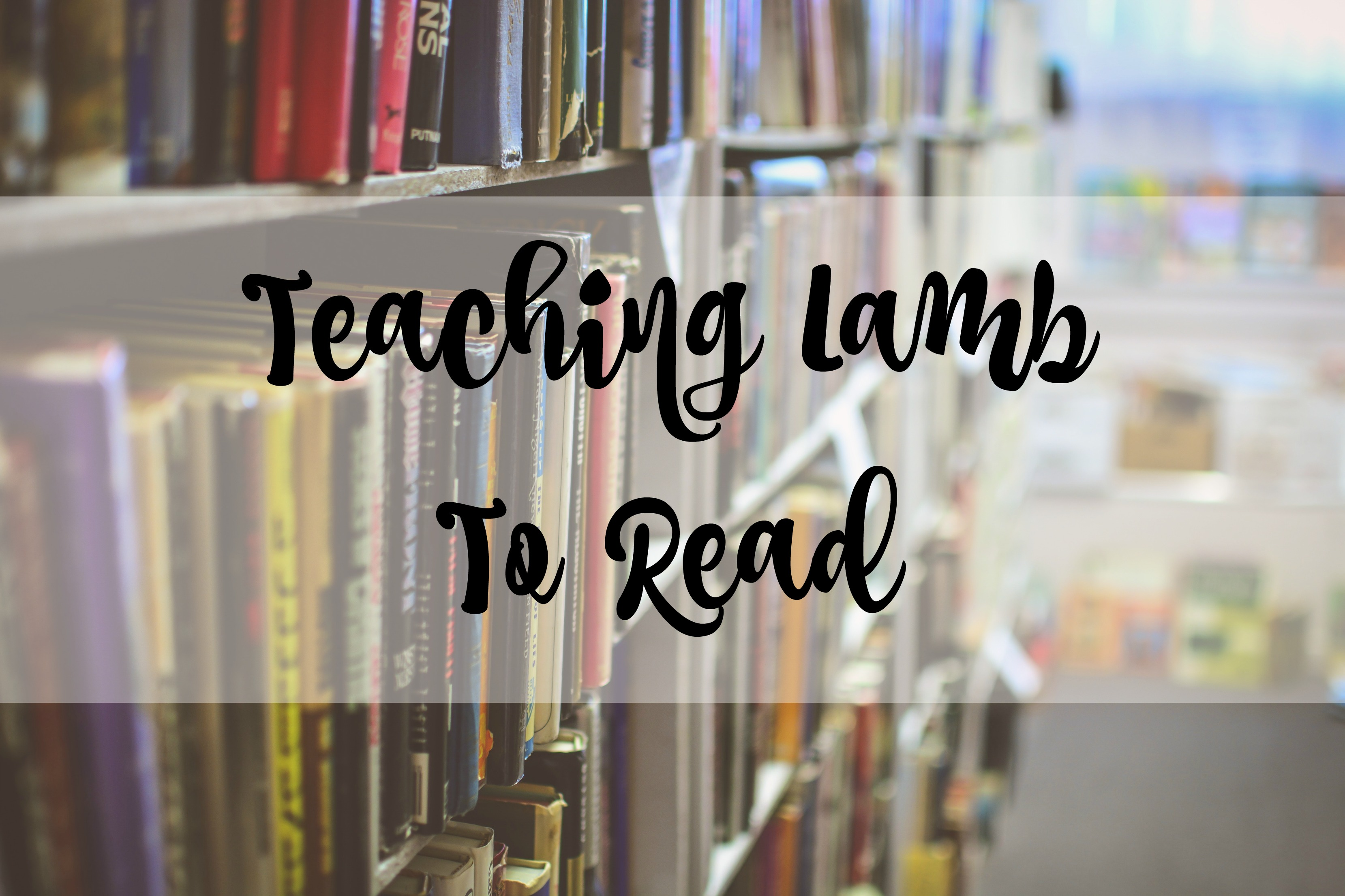 teaching lamb to read title
