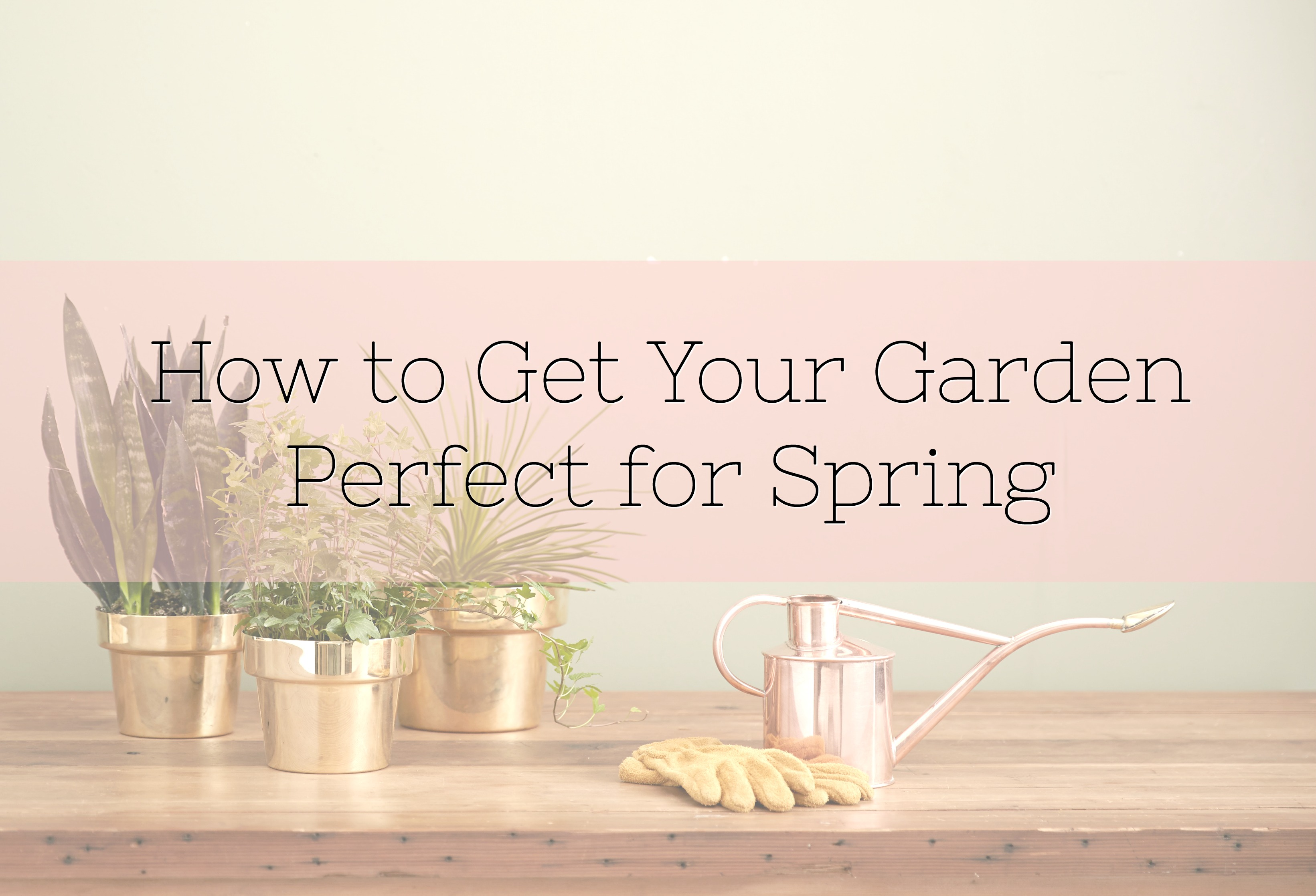 How to Get Your Garden Perfect for Spring title